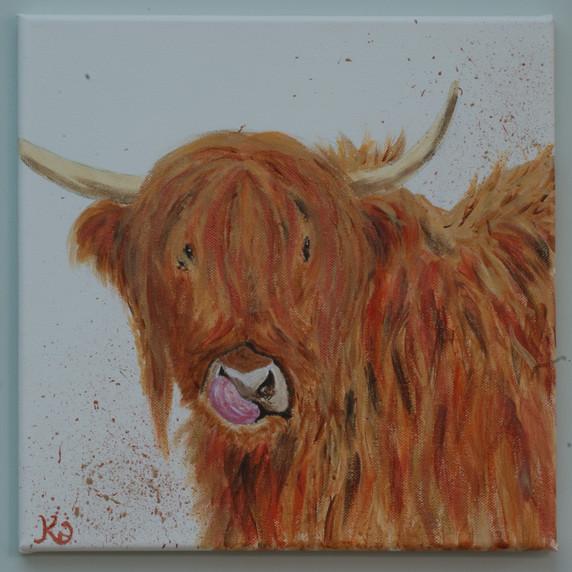 Woolly Highland Moo 2