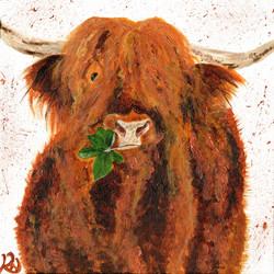 Highland moo 3