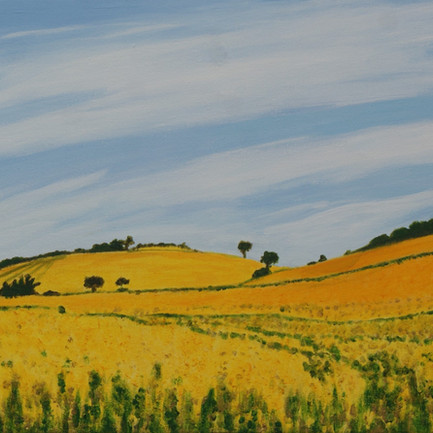 Cheddington fields of gold. Acrylic on Canvas