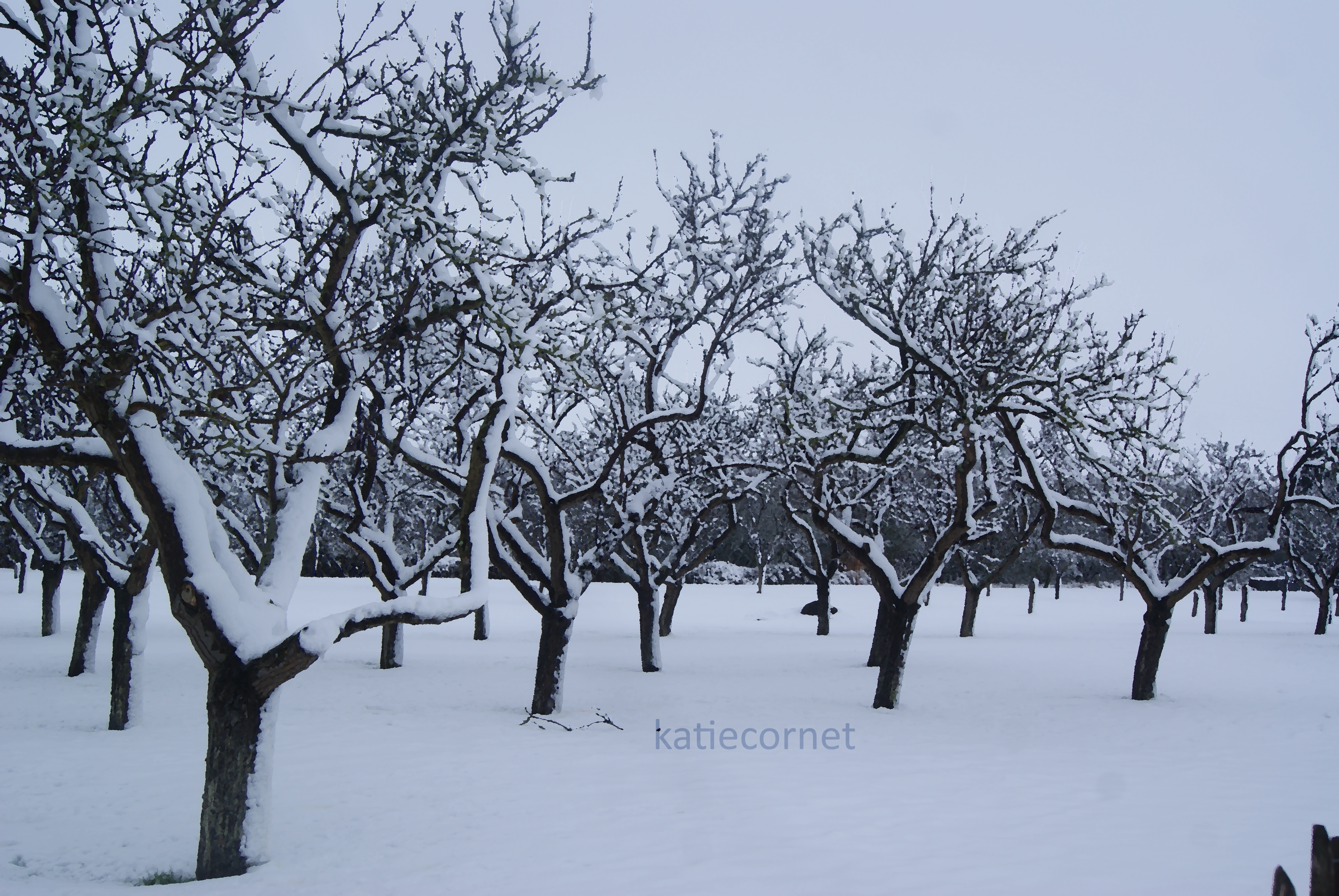 21.Snowy Orchard