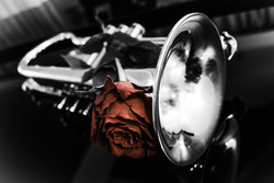2,7 Red rose and silver cornet