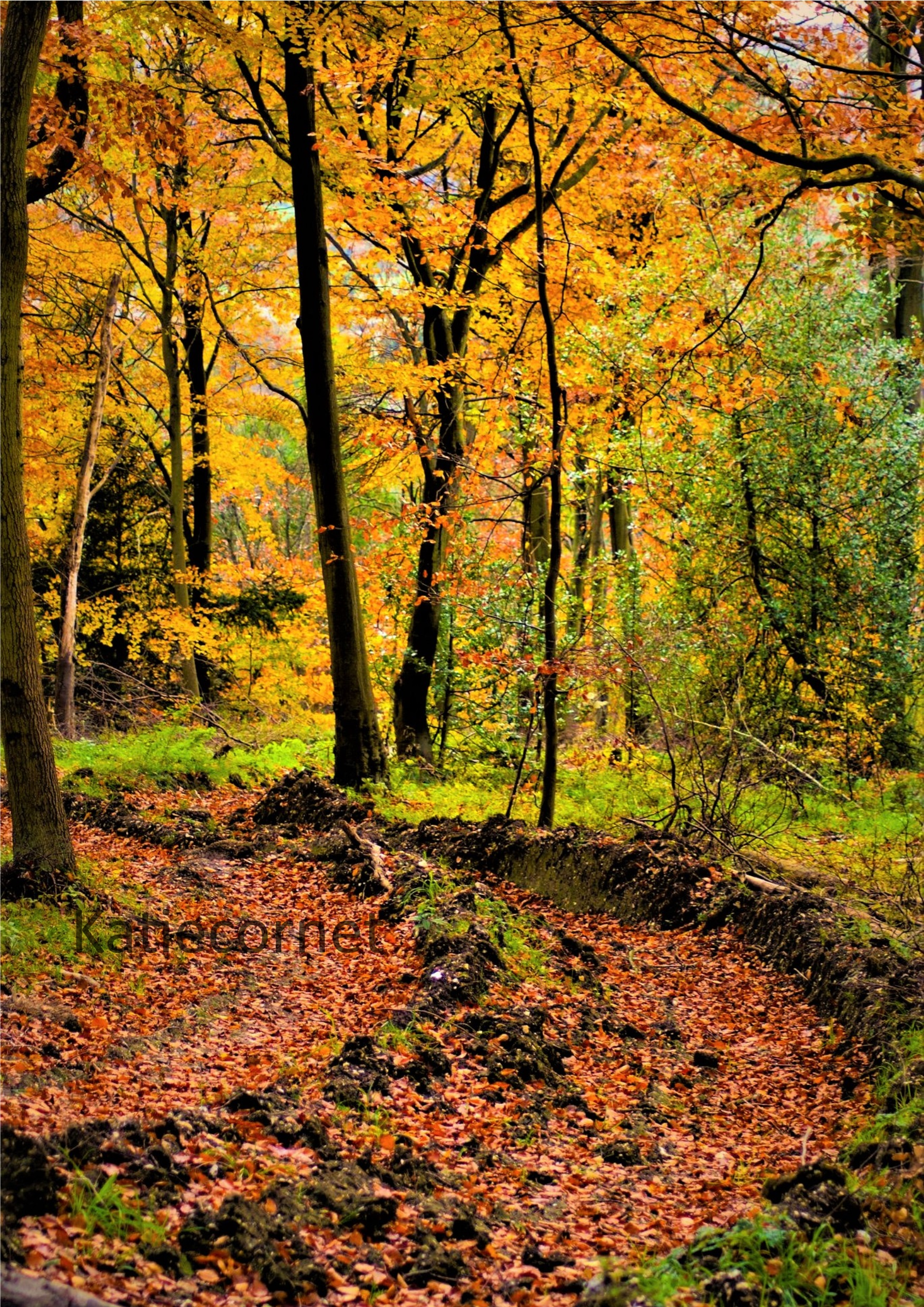 9.Red autumn leaf path, Wendover
