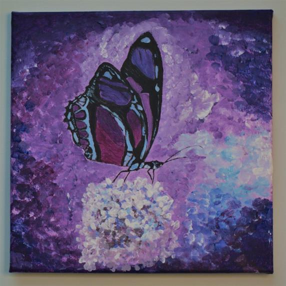 Purple Haze Butterfly