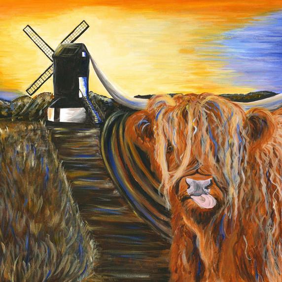 Highland Moo goes to Pitstone Windmill