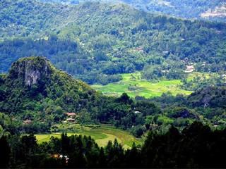 Agrowisata Ala Tana Toraja Ada di Pango-pango