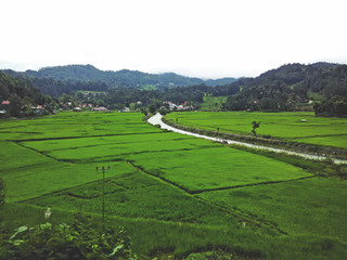 Pangli to Sa'dan Matallo: Green Carpet