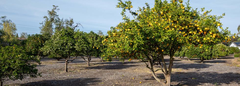 25606 Orchard Rim Ln-orchard-2.jpg