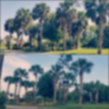 PicsArt_02-25-11.39.51.jpg