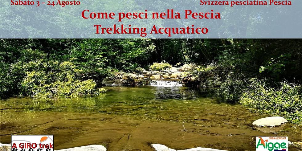 Like fish in Pescia