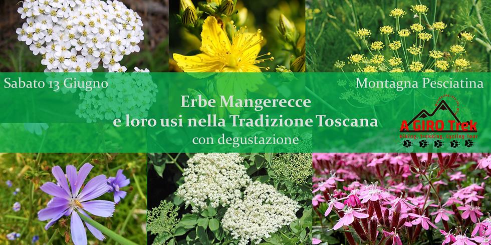 Erbe Mangerecce e loro usi nella Tradizione Toscana con degustazione