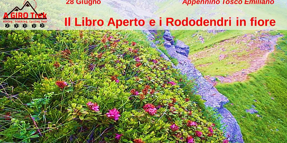 Il Libro Aperto e i Rododendri in fiore