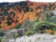 forest bathing parco nazionale aspromont