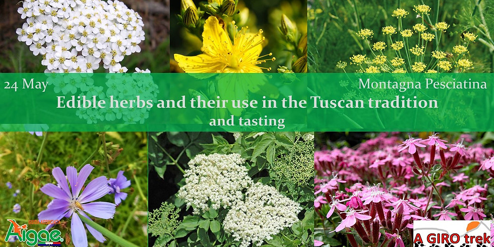 Edible herbs and their use in the Tuscan tradition