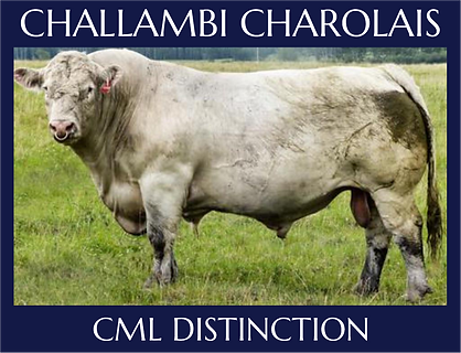 CML Distinction.png
