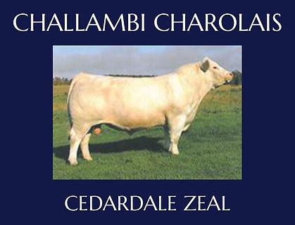 Cedardale Zeal.png