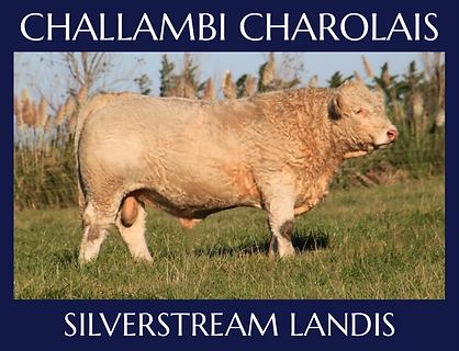 Silverstream Landis.png