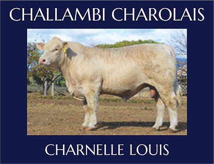 Charnelle Louis.png