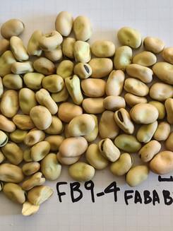 FB9-4 FABA BEAN