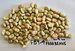 FB9-4 FABA BEAN