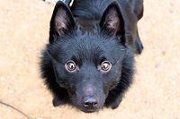 réeducation comportemental de chien à lyon