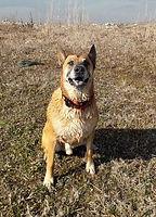dressage de chien à lyon