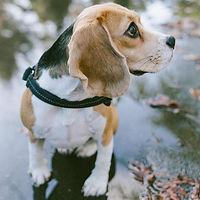 beagle éducation sur lyon