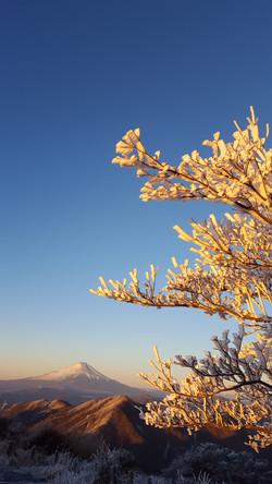 蛭ヶ岳山頂からの霧氷と富士山