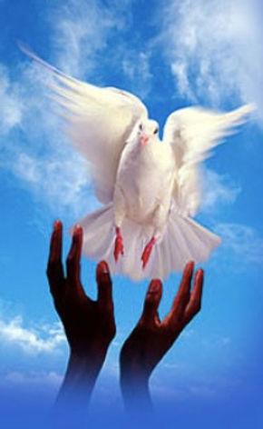 bird photo.jpg
