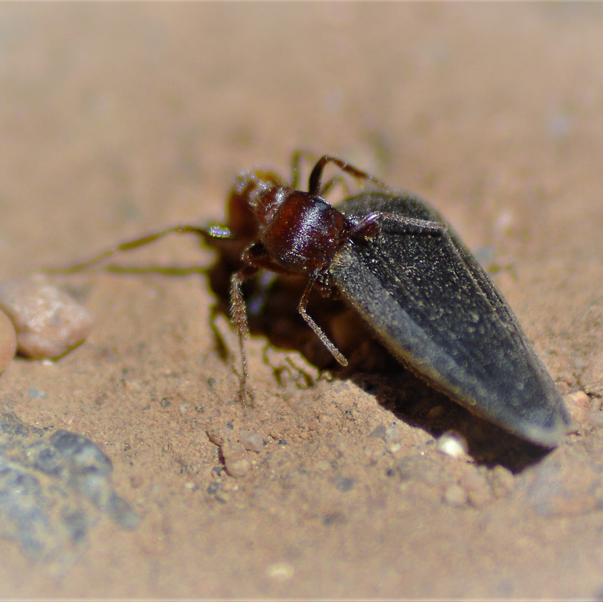 2018 May Backyard Habitat 93 Ant 4