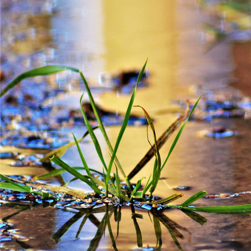 2018 May Backyard Habitat 52 Water and Grass 3