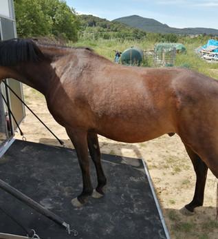 Un poney de sport pour le CH de Mougins