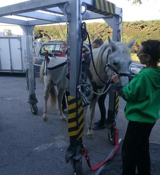 Transport d'un cheval ne pouvant plus se lever