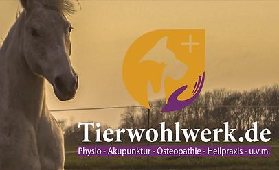 Tierwohlwerk-Leipzig-Tierohysiotherapie-Akupunktur-Heilpraxis-Ostheopathie