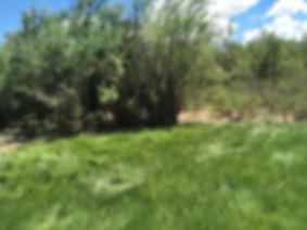 saltgrass_bosquecito.jpg