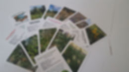 Flashcards2.jpg