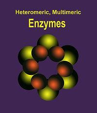heteromultimeric E copy.jpg