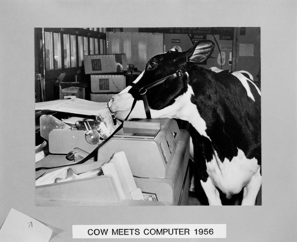 "Black and white cow kissing a computer; text reads, ""Cow Meets Computer 1956"""