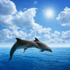 21575590-dolphins-jumping-blue-sea-and-s