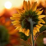 Moonflower_Yoga_YogaNidra_hartsverlangen-2.png
