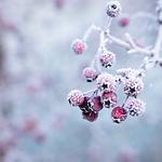 Moonflower_Yoga_innerlijkewinter_vierkan