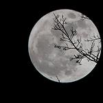 Moonflower_Yoga_RestorativeXL.png