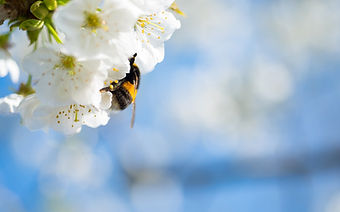 cherry-blossom-5022811_1280.jpg