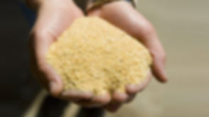 soybean-meal_137536.jpg