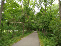 Keeping It Clear: How the Fishing Line Trail is Maintained