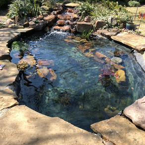 Fall/Winter pond clean out