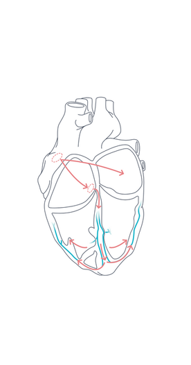 Illustration coeur BPM Withings