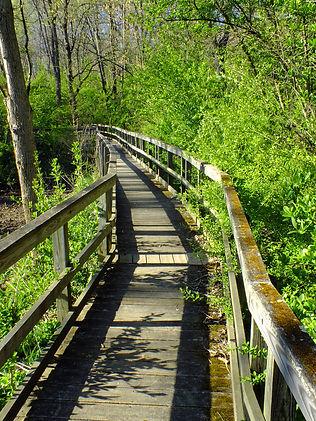 trail walk.jpg