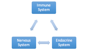 Chiropractic Care and the Immune System