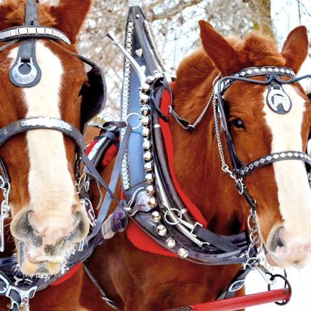 Horse Drawn Open Sleigh Rides - OH What Fun!