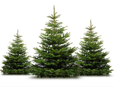 Where (and how) to Chop Down Your Own Christmas Tree!